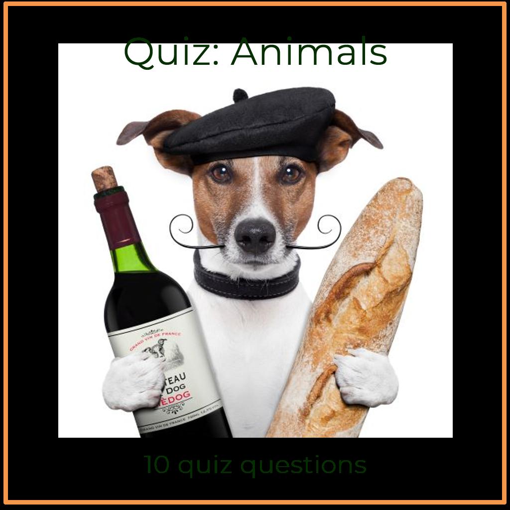 General knowledge quiz animals